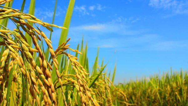 クボタ農機具買取強化中|宮城農機具市場記事アイキャッチ画像